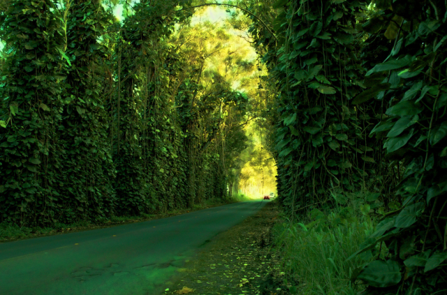 naturetunnel07
