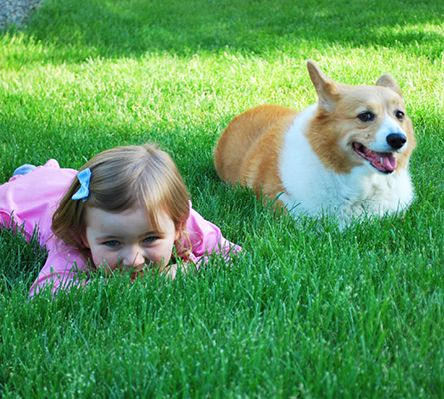 Organic Choice fertilizers are more kid and pet-friendly, so you and your family can enjoy your lawn immediately after they're applied. And they work on any type of grass in any climate. Learn more: http://bit.ly/1LKXF0Z