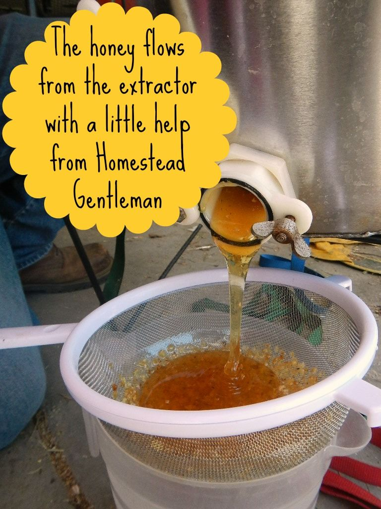 how to process raw honey with an extractor raw honey honey and bees