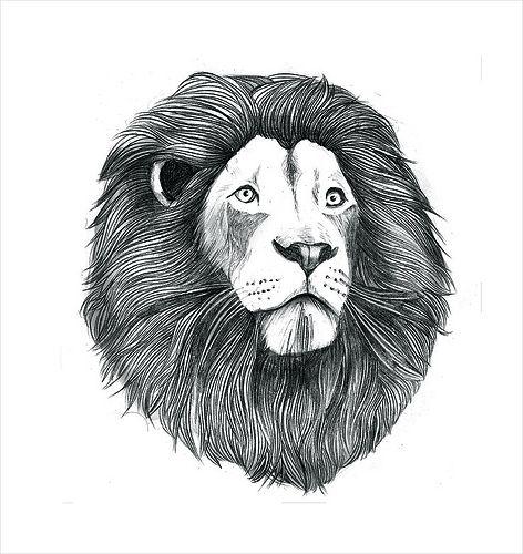 Untitled Lion Illustration Lion Drawing Lion Art