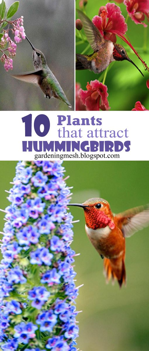 10 Plants That Attract Hummingbirds