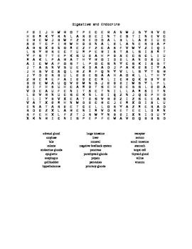 Word Search Covering The Digestive and Endocrine Systems