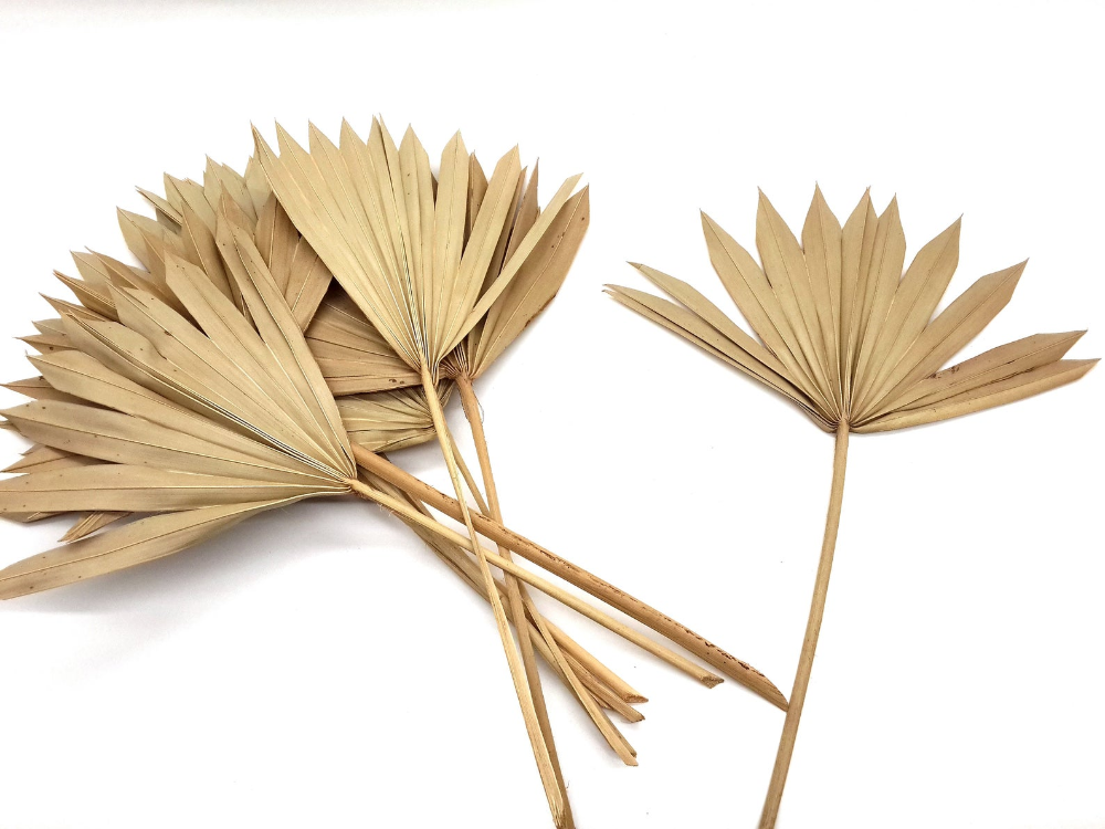 Natural Palm Leaves Dried Palm Leaves Tropical Leaves Large Etsy Palm Leaf Decor Tropical Wedding Decor Tropical Leaves