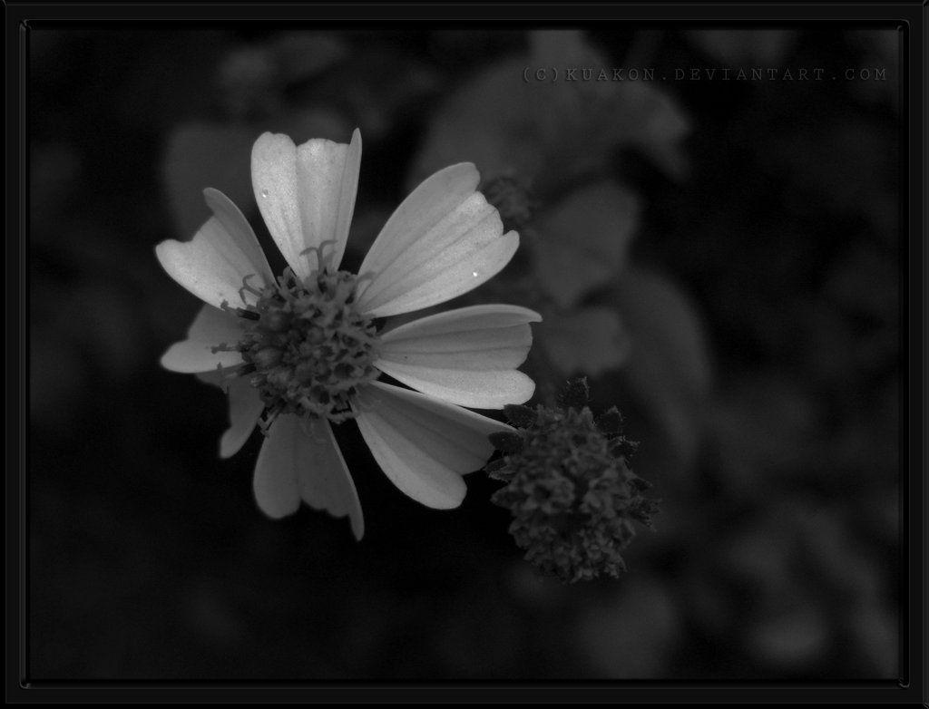 White Heart - 24/1/2009