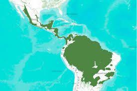Image Result For Black Panther Habitat Map Black Panther