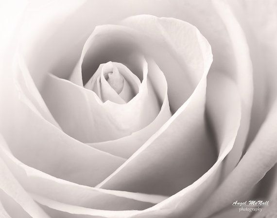 Black And White Flower Photography Rose Macro Elegant Neutral Colors Wall