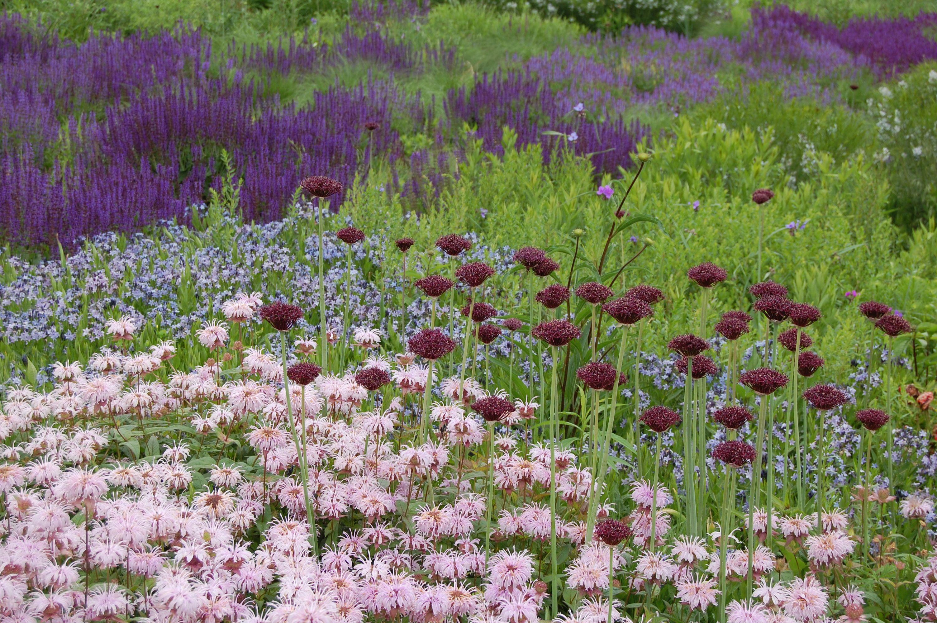 Chicago S Lurie Garden Plants Chicago Botanic Garden Garden Design