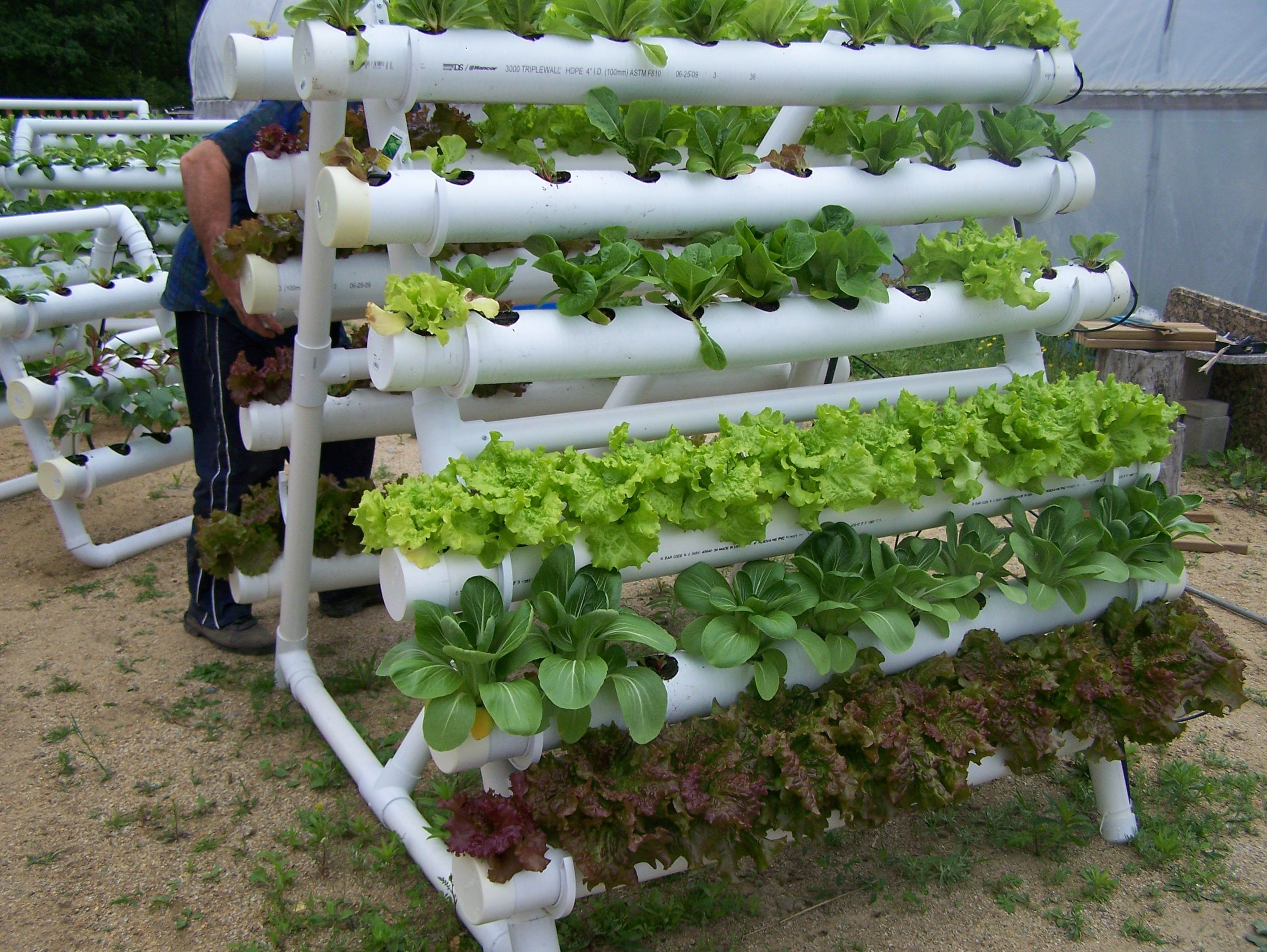 i would love to try this a hydroponic system constructed from pvc