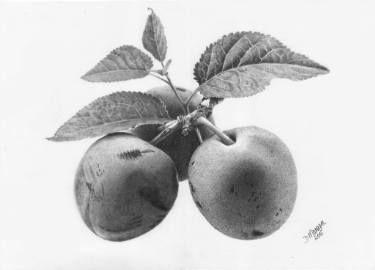 "Saatchi Art Artist Dietrich Moravec; Drawing, ""Three Plums"" #art"