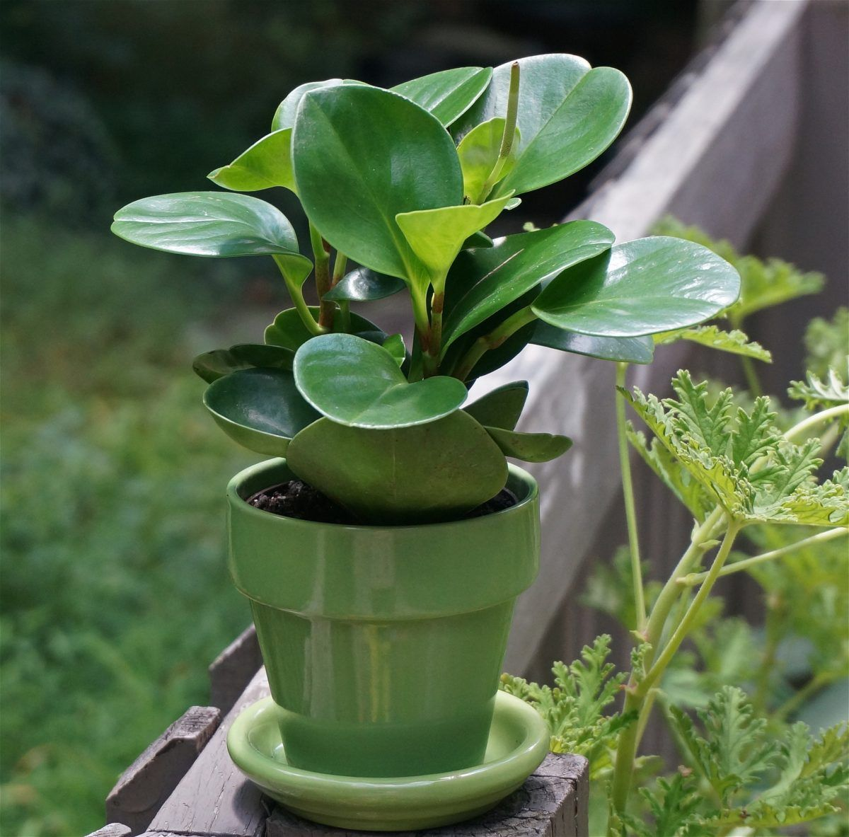 Photo of Safe Houseplants for Pets | The Girl with a S