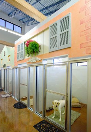 2010 Hospital Design People S Choice Award Entry Yukon Hills Animal Hospital Dog Clinic Dog Hotel Cheap Dog Kennels