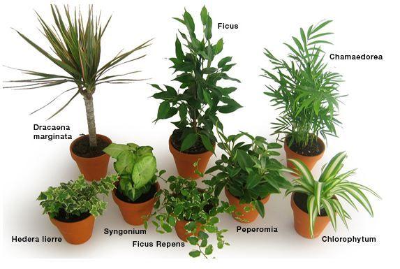 plante interieur increvable