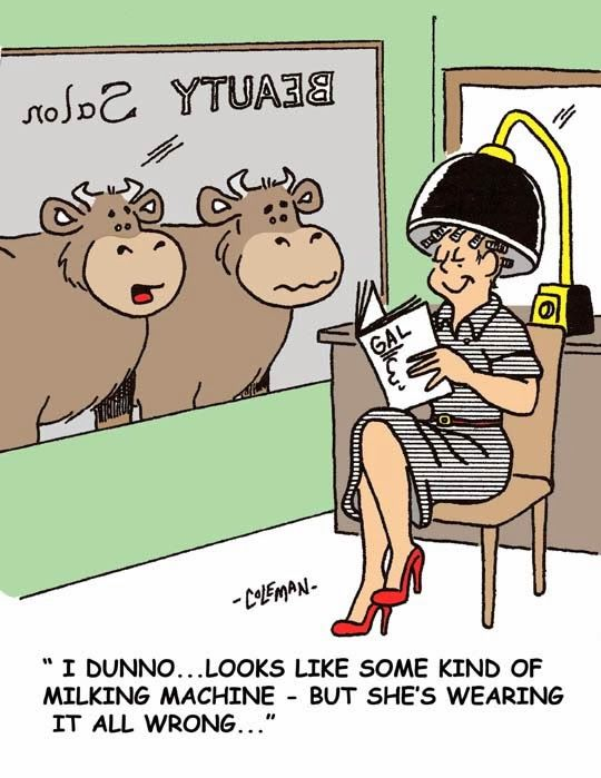 How Udderly Ridiculous Funny Animal Jokes Animal Jokes Cows Funny