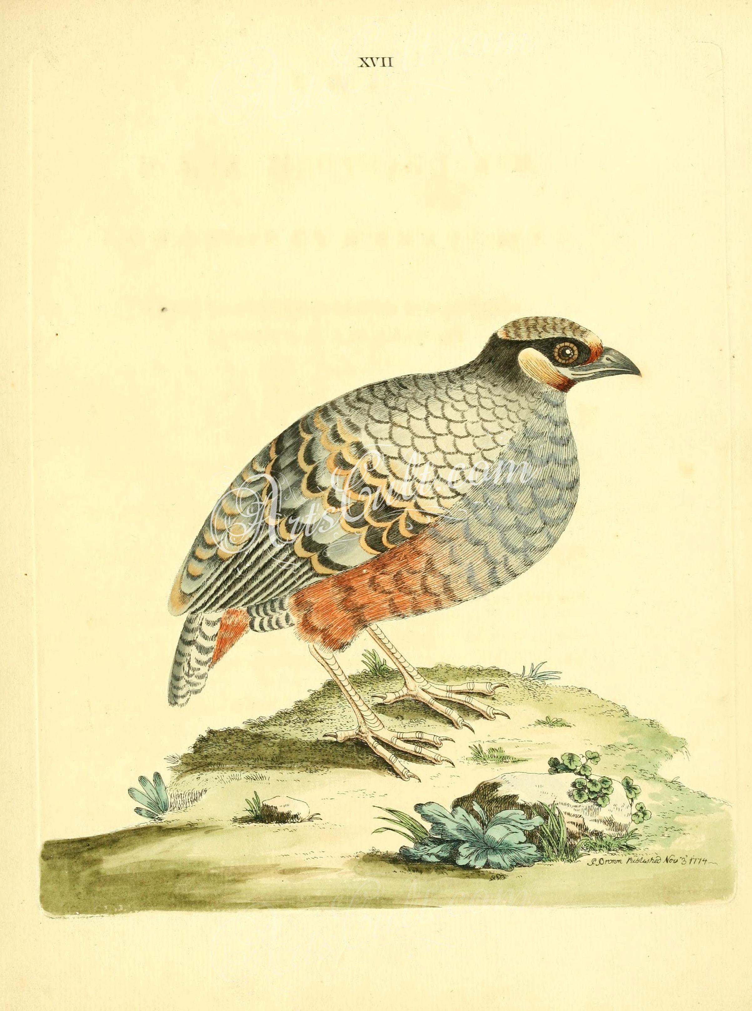 Birds javan partridge botanical floral botany natural