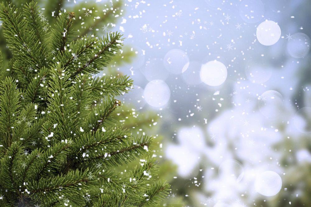 How To Grow A Christmas Tree Farm Ehow Uk Christmas Tree Farm Spruce Tree Tree Farms