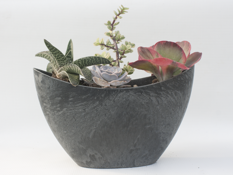 New Succulent Bowls At Walla Nursery Co