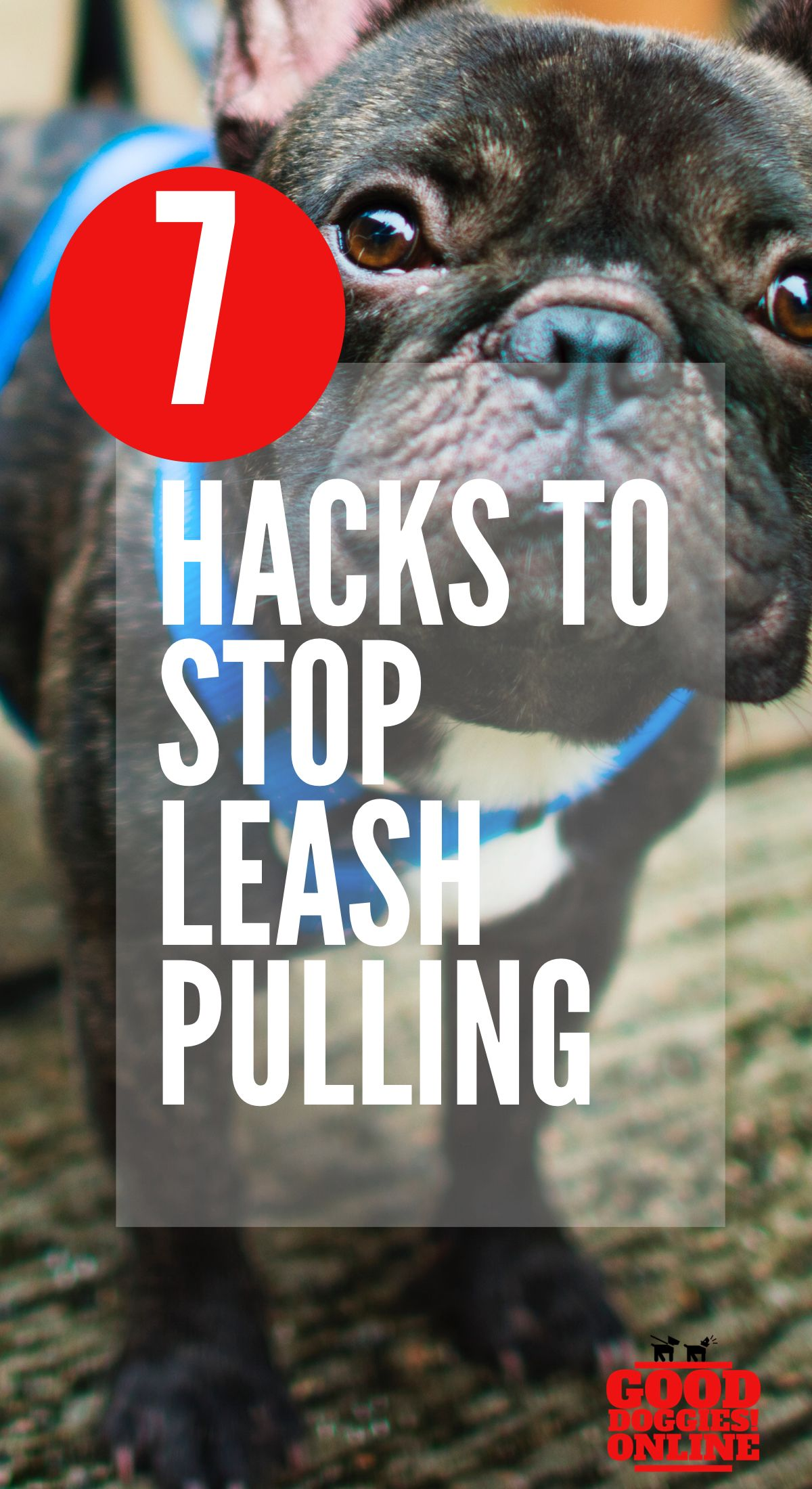 Stop Leash Pulling By Your Dog And Enjoy Walking Your Dog Again