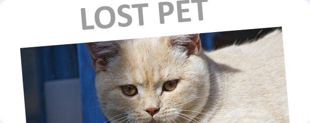 Create A Lost Pet Poster Download Our Template Print The Flyer