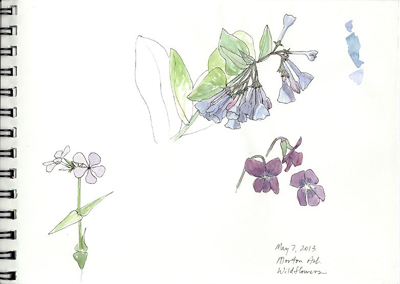 bluebells and violets bluebell forest bluebell sketchbook journal how how to draw flowersflower