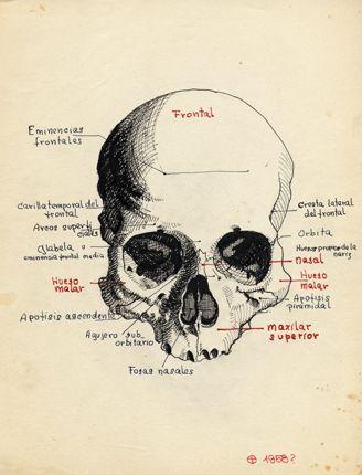 Oscar Tusquets Blanca - PINTOR - Dibujos - Trabajos escolares - 09. Cráneo