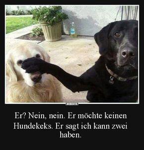 Besten Bilder Videos Und Spruche Und Es Kommen Taglich Neue Lustige Facebook Bilder Auf Debeste De Hier We Hund Witze Lustige Hund Bilder Lustige Hunde Fotos