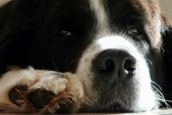 5 Ways You're Crushing Your Dog's Spirit Without Even