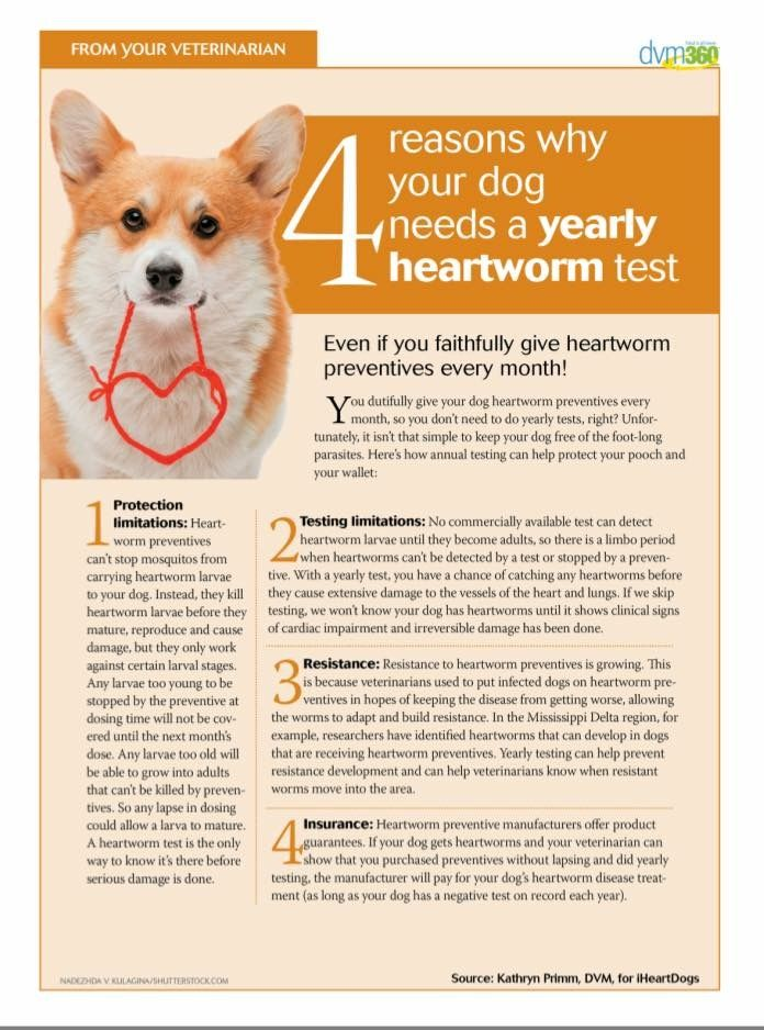 Pin By Custer Mcdermott Animal Hospital On Information For Pet Owners Pet Clinic Vet Clinics Veterinary Care