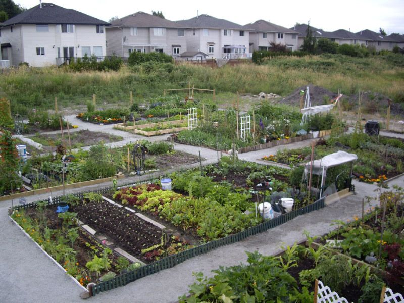 Community Garden Ideas