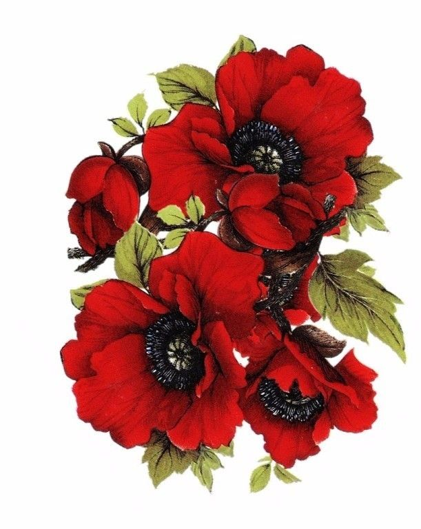 decoupage poppies pinterest fabric flowers mightylinksfo