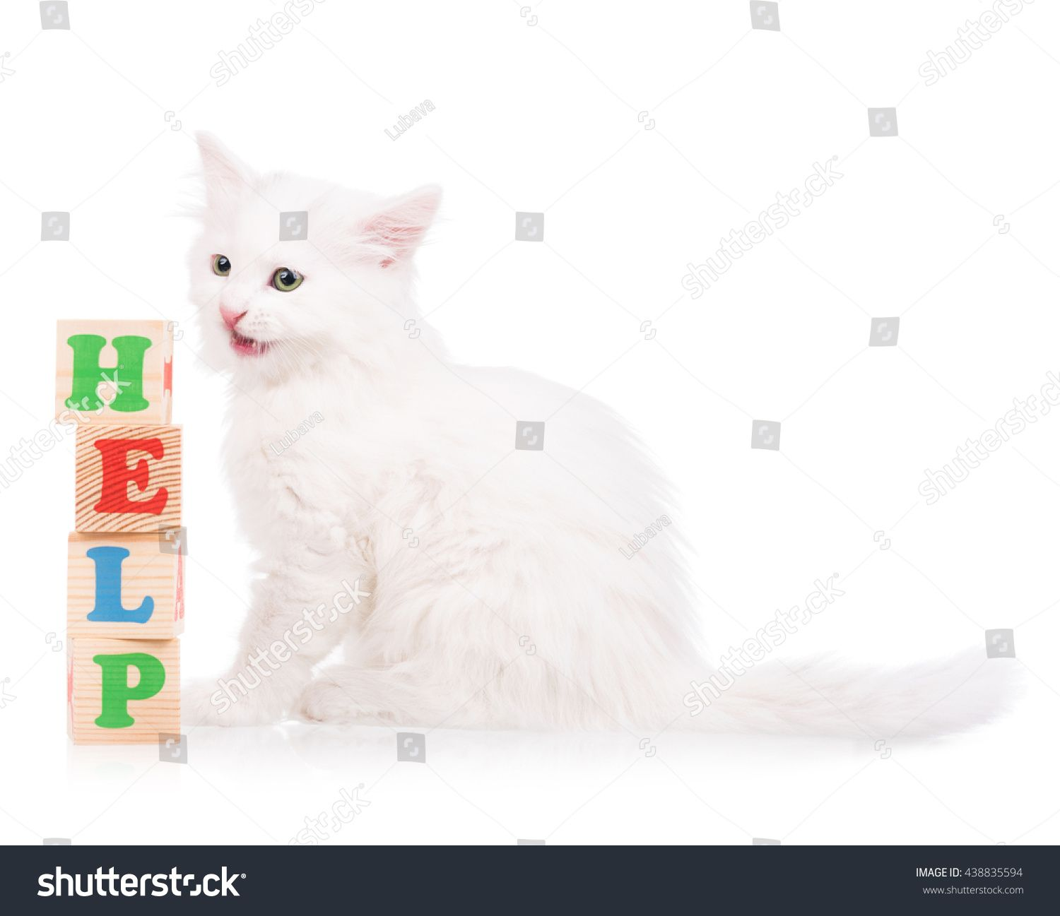 Cute Fluffy White Kitten With Playing Cubes Isolated Over White Background Ad Sponsored White Kitten Cute Fluffy In 2020 White Kittens Kittens Cutest Kitten