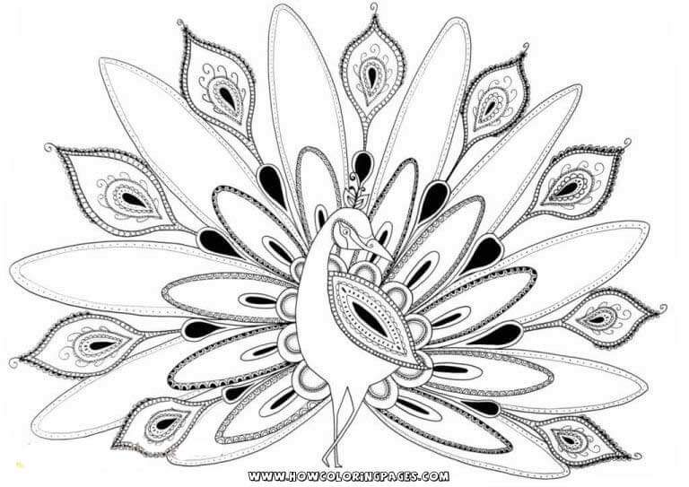 Hard Peacock Coloring Pages Peacock Coloring Pages Bird Coloring Pages Cool Coloring Pages