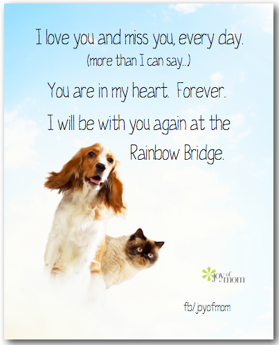 Dog Heaven Poem Doggie Heaven Pet Loss Dogs Dog Quotes