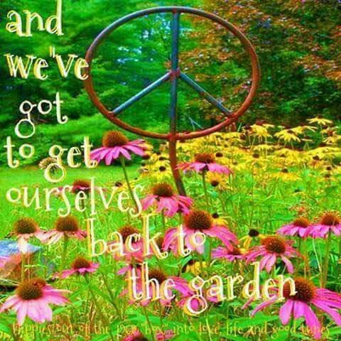 And we\'ve got to get ourselves back to the garden | Lyric memes ...