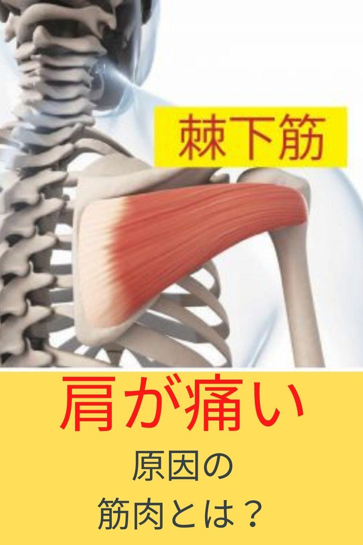 原因 肩 の 痛み