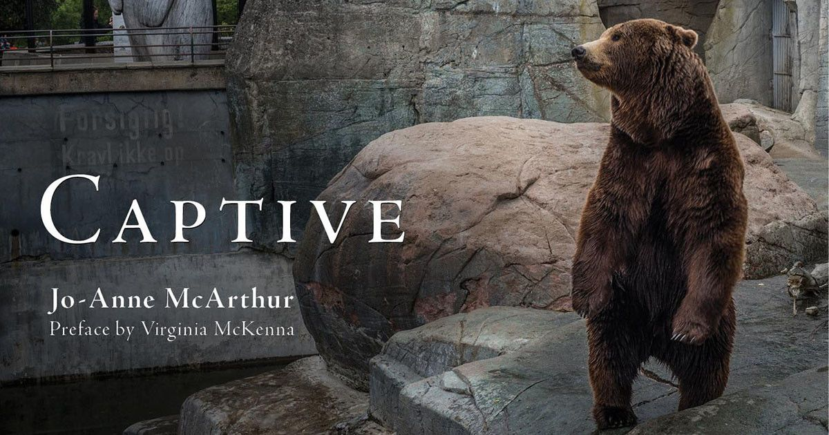 Please consider funding Captive by JoAnne McArthur, so
