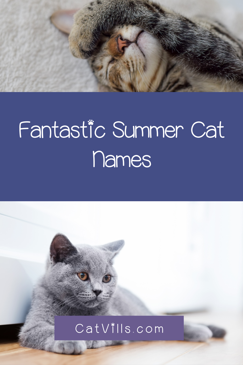 60 Summer Cat Names That Will Make You Feel Warm Fuzzy Catvills In 2020 Cat Names Cats Cute Cats And Kittens