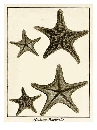 Star Fish Series I Art Print Art Com Art Print Display Art Prints Art