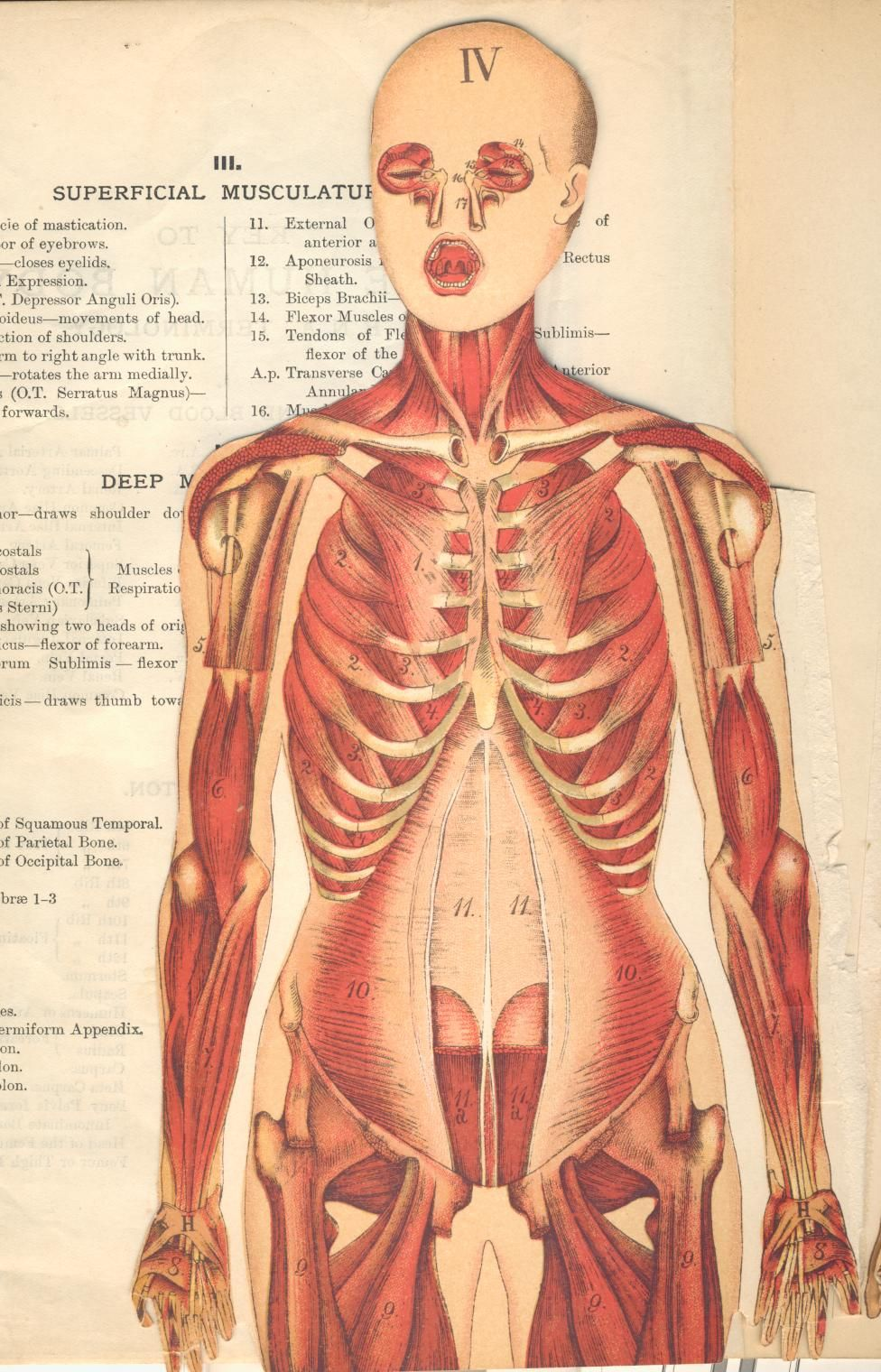 body parts from the family medical book medical diagrams. Black Bedroom Furniture Sets. Home Design Ideas