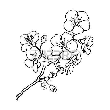 Sketch Twig Sakura Blossoms Vector Illustration Fleur De Cerisier Dessin Fleur De Cerisier Dessin Fleur