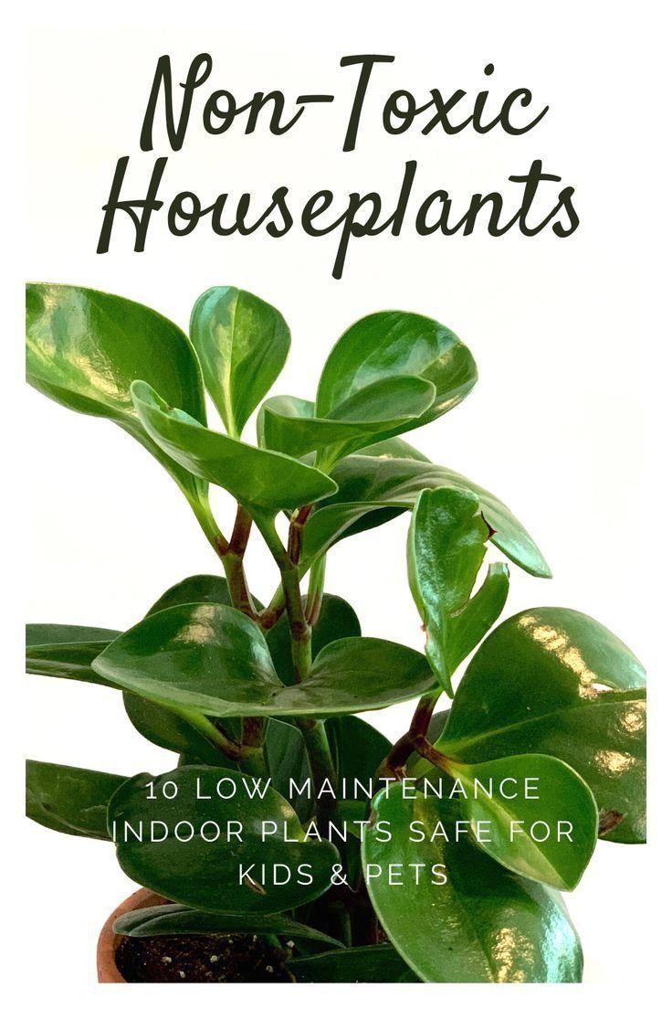 10 Best NonToxic House Plants Safe for Children, Cats