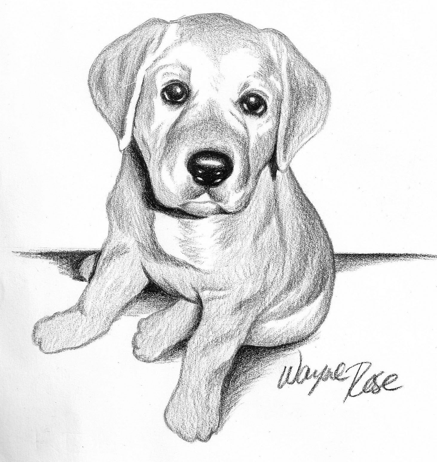 Lab Puppy Illustration Animal Drawings Puppy Sketch Animal Sketches [ 1545 x 1462 Pixel ]