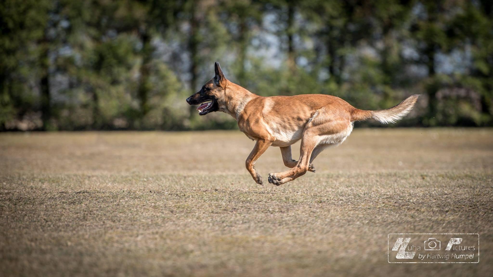 Rottweiler puppies oregon washington