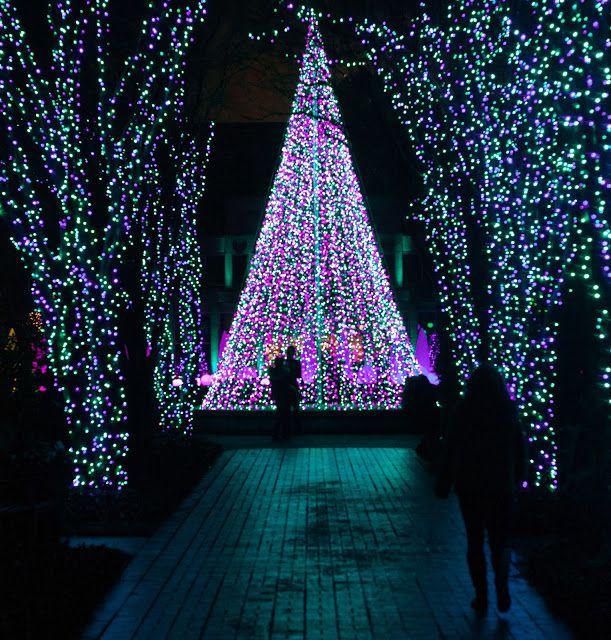 Garden Lights at Atlanta Botanical Gardens so pretty