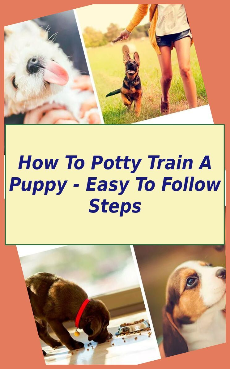9 Genius Tips For House Training A Puppy Puppy House Training Puppy Potty Training Spray Potty Training Puppy Puppy Training Puppy Toilet Training