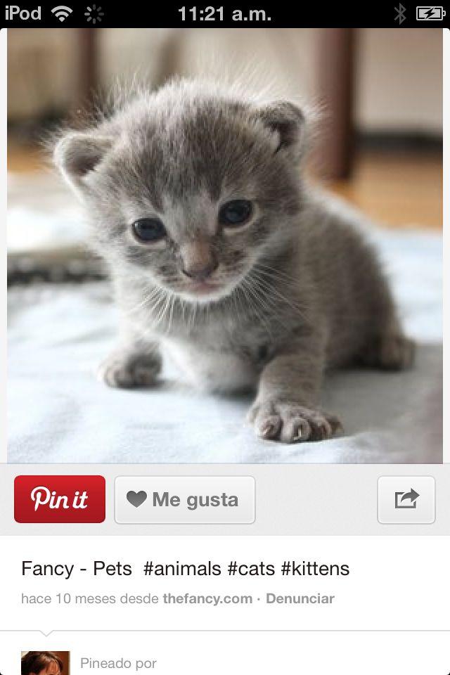 Aún que no me gustan los gatos este está muy tierno