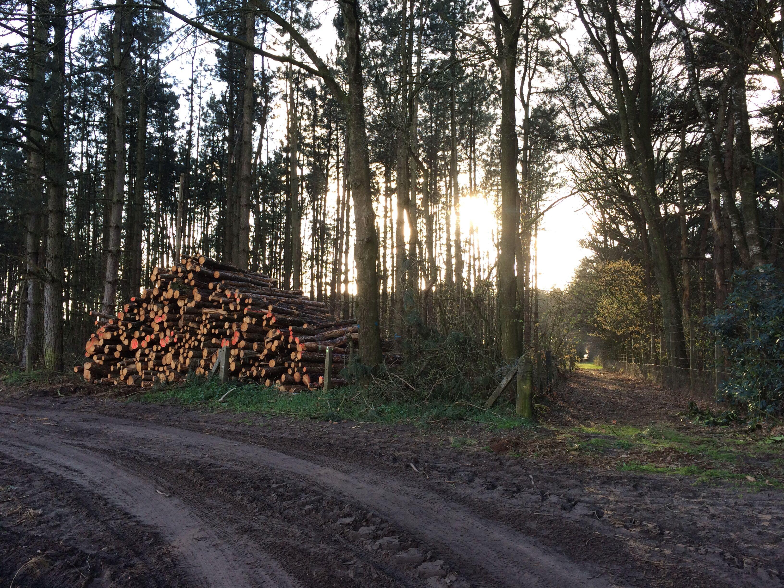 Wandeling - bomen - werk