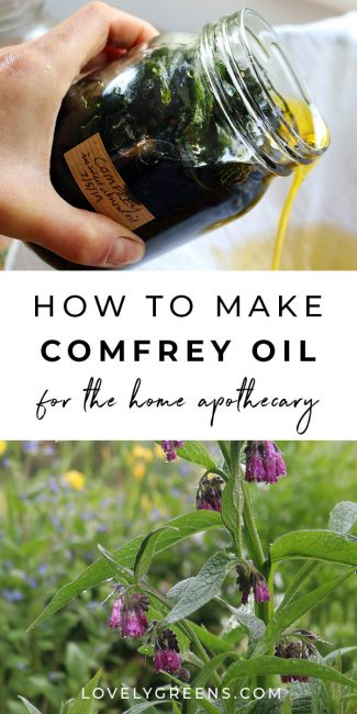 How to use and make Comfrey Oil (and why it's controversial is part of Comfrey oil, Herbalism, Comfrey, Herbs, Herbal remedies, Natural healing remedies - Using comfrey externally to heal bruises, sprains, and other injuries, information on alkaloid toxicity, and how to make comfrey oil  Salve recipe included