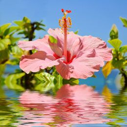 How To Protect Your Hibiscus From Aphids Try These 5 Ace Ways