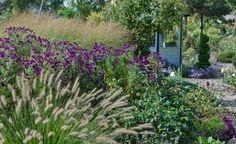 Viele Gräser entfalten erst gegen Ende der Saison ihre Schönheit. Gemeinsam mit spät blühenden Stauden werden sie zum Dream-Team im Ziergarten! Wir zeigen, welche Kombinationen besonders dekorativ sind