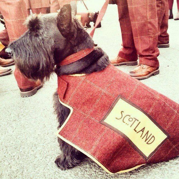 Scottie dogs 'steal the show' at Commonwealth Games